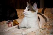 Красивые котята в дар ждут вас!