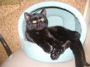 Котик Шахтер ищет хозяев!!!